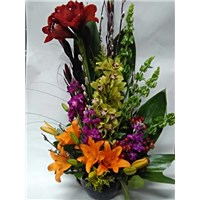 Orchid_Amaryllis_and_Lilies_(small_orchid)_in_a_basket_$99.99_SKU_BA-1118